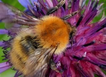 Buzz pollinators
