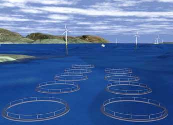Wind farm and fish farm visualisation