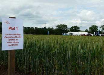 Photograph of field plot at Cereals in Practice