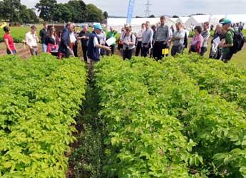 Visitors at field plots at Potatoes in Practice 2012
