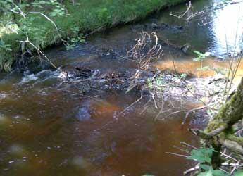 Woody debris in a stream