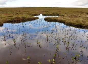 Peatlands play a key role in storing much of the UK's soil carbon