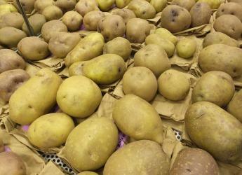 Potatoes (c) James Hutton Institute