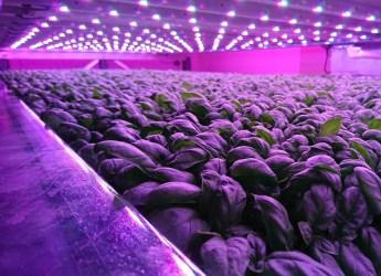 Produce growing on IGS Ltd's vertical farm at our Dundee site