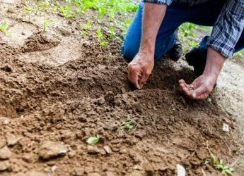 The Rock On Soils project involved scientists and farmers working together