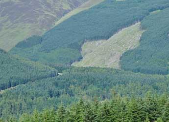 Glen Doll forests (c) James Hutton Institute