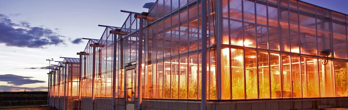 Dundee glasshouses (c) James Hutton Institute