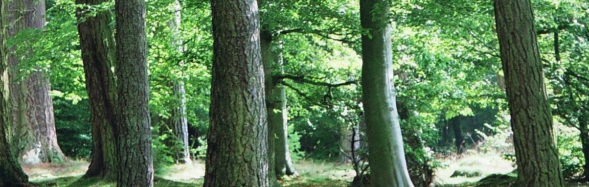 Forests provide many crucial ecosystem services (c) James Hutton Institute