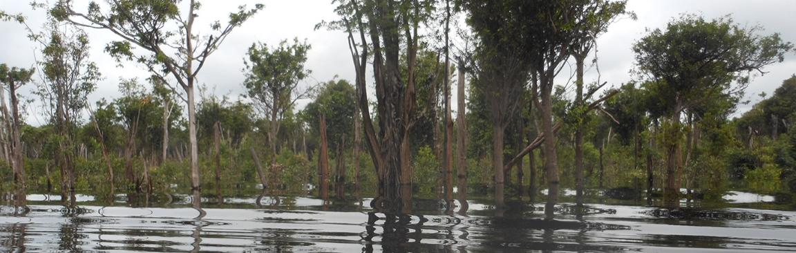 The expedition focussed on an area around the Rio Cuieiras in the Amazon region
