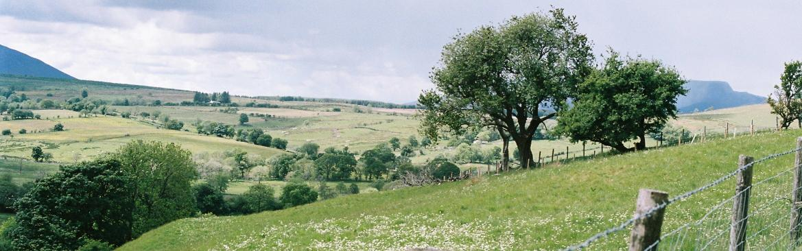 Imagen of a landscape with fields and trees