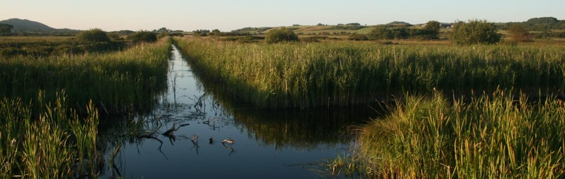 Natural fen in Anglesey (image: CEH)