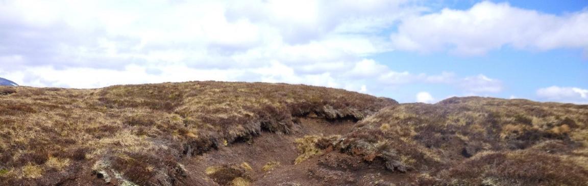 An image of a peatland landscape
