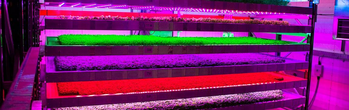 IGS Ltd's vertical farm at our Dundee site