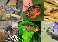 Invertebrate species (courtesy Jenni Stockan)