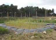 Dinnet constructed wetland demonstration site (c) James Hutton Institute
