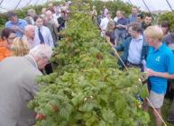 Photograph of visitors sampling raspberries at Fruit for the Future