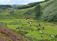 Image of land at Glensaugh