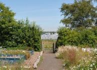 Living Field, Invergowrie (c) James Hutton Institute
