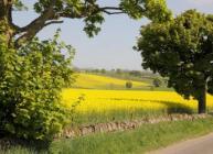 Field of oilseed rape at Balruddery farm (c) James Hutton Institute