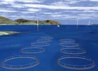 Wind farm and fish farm visualisation