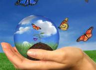 Hand holding a sphere with seedling growing in soil and butterflies flying