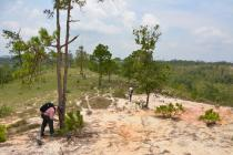 Severe soil erosion after removal of the pine forest