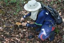 Carefully exposing a Russula for photographing