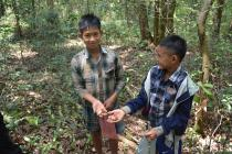 Two local lads collecting a red Russula for selling in the market