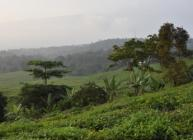 African landscape (courtesy RTBfoods project)