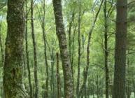 Forest near Ballater (c) James Hutton Institute