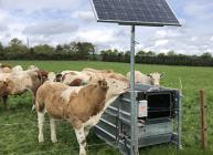 Beef Monitoring tool identified as a potential digital game changer