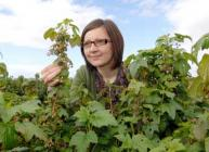 Photograph of Dorota Jarret inspecting blackcurrant bushes