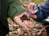 Ectomycorrhizal fungi on roots (c) James Hutton Institute
