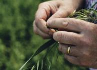 Image of farmer's hands