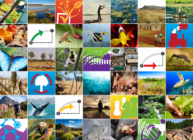 The Global Biodiversity Outlook 5 is published by the United Nations CBD