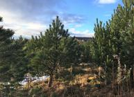 Hutton Scientists to Examine How Trees Can Help Reduce Greenhouse Gas Emissions in the UK