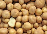 New EU-funded research will develop strategies for resilient potatoes