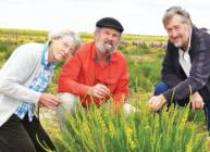 Professors Sprent, Van Wyk and Howieson examine a Lebeckia plant © J Sprent