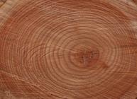 Photograph showing tree growth rings