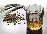 Photograph of glass of whisky and barley