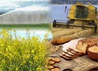 Montage of field irrigation, combine harvester, bread and oilseed rape