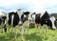 New research highlights the attitudes of people working in the UK dairy sector