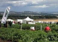 Photograph of field plots and exhibits at Potatoes in Practice 2010