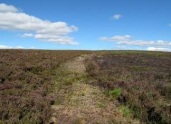 The new panel aims to ensure sustainable and legal grouse management practices