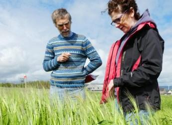 Scientists discussed heritage of bere barley in Orkney (c) James Hutton Inst