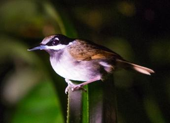 We need to learn to nurture nature, Hutton ecologists say (Photo: UNEP)