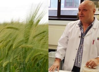Cereal crops / Professor Robbie Waugh (c) James Hutton Institute
