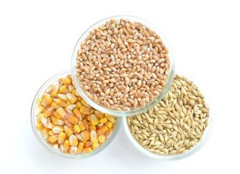 Maize, wheat and barley (courtesy pixabay.com)