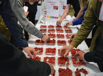 Research to improve flavour of UK raspberries