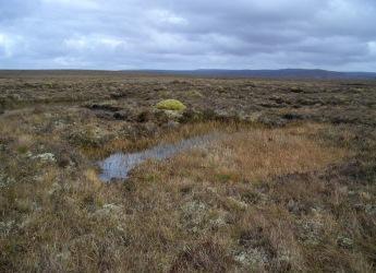 Blanket bogs deliver multiple ecosystem services (c) Martin Sommerkorn